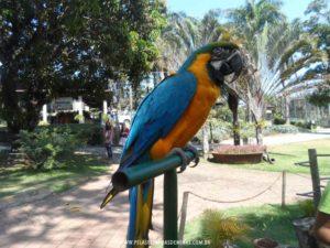 Parque Vale Verde - Arara Canindé