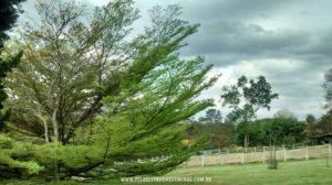 Parque-Vale-Verde-Fotos-06