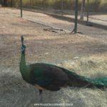 Parque-Vale-Verde-Fotos-16
