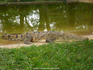 Foto: Jacaré - Zoológico de Belo Horizonte