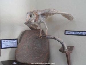 museu-arqueologico-lagoa-santa-castelinho-14