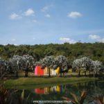 Instituto Inhotim – Brumadinho: Um Passeio Inesquecível com Muita Arte e Natureza