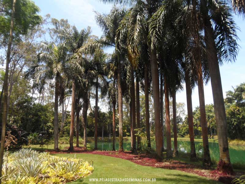 Palmeiras do Jardim Botânico Inhotim