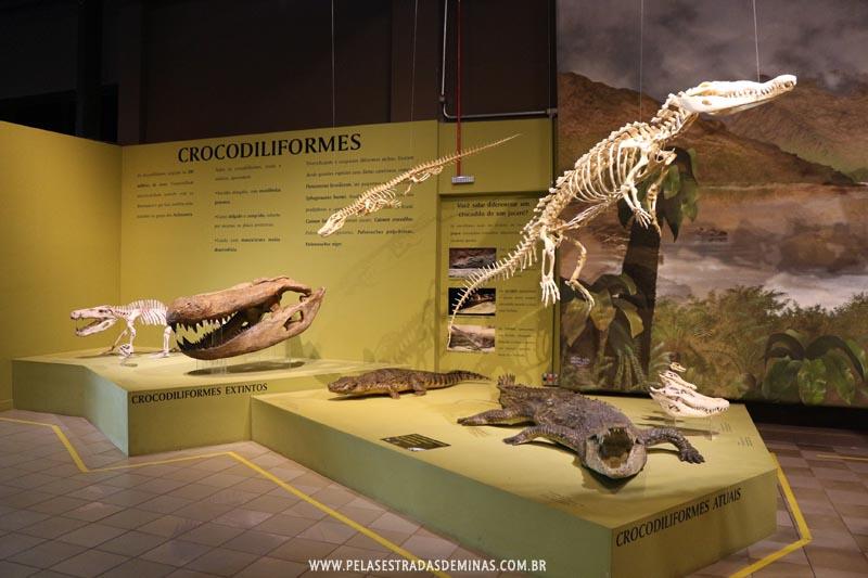 Pterossauros do Museu de Ciências Naturais da PUC Minas