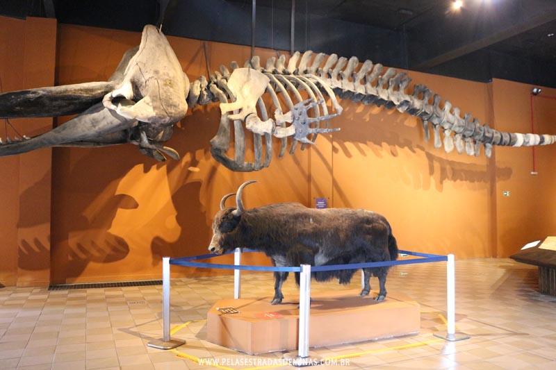 Exposição Fauna Exótica - Museu de Ciências Naturais da PUC Minas