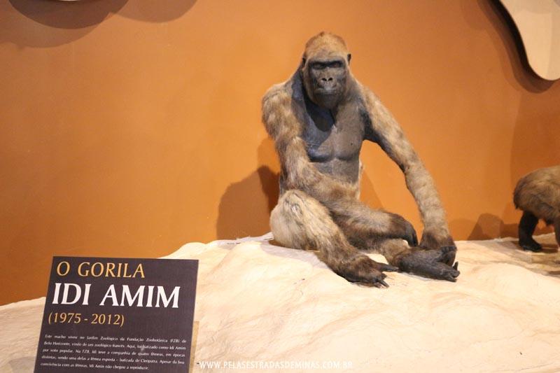 Gorila Idi Amin - Museu de Ciências Naturais da PUC Minas