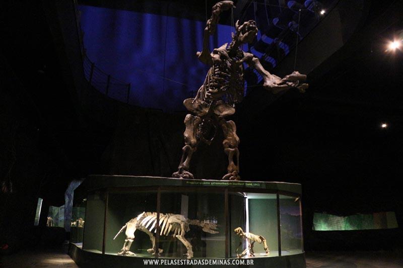 Fóssil Preguiça Gigante - Museu de Ciências Naturais da PUC Minas