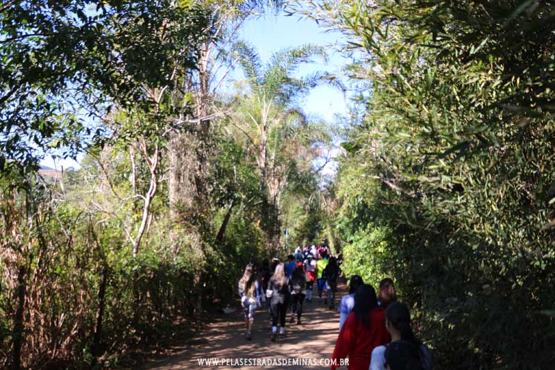 Caminhada pelas Estradas de Macacos - Trilha Marumbé - Nova Lima Entre Trilhas