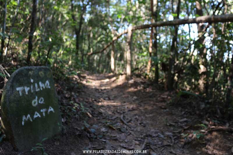 Parque Estadual Serra Verde em Belo Horizonte - Trilha da Mata
